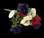 Anemone Bush Purple/Red/White