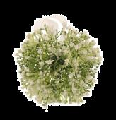 14cm Gypsophila Pomander White