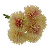 24cm Spiky Chrysanthemum Bundle Cream/Pink