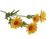 72cm Daisy Spray Yellow