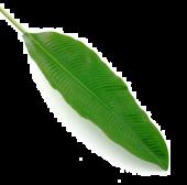 92cm Banana Leaf Green