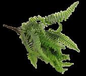 43cm Flocked Fern Bush