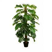 Split Philo Tree w/Pot 150cm
