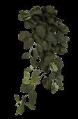 "33"" Fittonia Hanging Bush Green/Red"