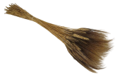 Triticum (Wheat) W/Black Grain x 100 Stems
