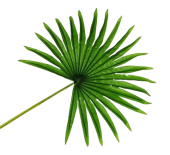 Real Touch Fan Palm Leaf Green 82cm