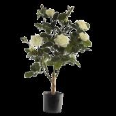 Rose Lady Tree In Pot 65cm Cream