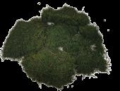 Flat Moss Preserved App 500g
