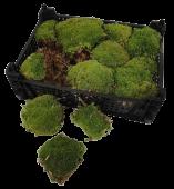 Boll Moss Fresh 0.24mtr Natural