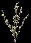 Cherry Blossom Branch Cream 92.5cm UV