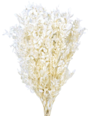 Preserved Ruscus - Bleached White - 150g