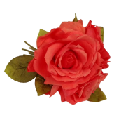 24cm Coral Open Rose Posy x 3 Heads