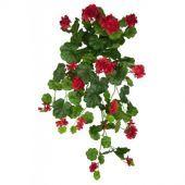 Geranium Hanging Bush 80cm Red