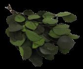 Preserved Eucalyptus Populus Green App 80g