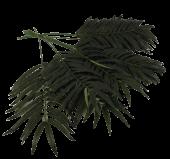 70cm Palm Leaf x 12