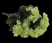 42cm Gypsophila Bush