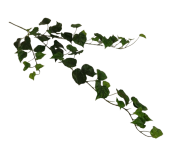 80cm Irish Ivy Spray Weather Resistant