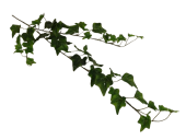 80cm English Ivy Spray Weather Resistant Green