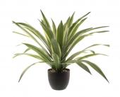 74cm Dracaena Plant In Pot Cream/Green