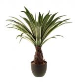 80cm Dracaena Plant In Ceramic Pot Cream/Green
