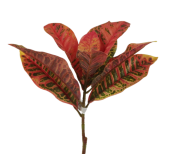 Croton Stem Green/Orange 70cm