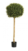 6' Boxwood Ball Tree W/2,952 Leaves