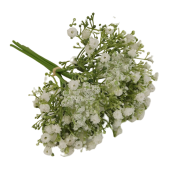 28cm Gypsophilia Bundle Cream