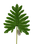 Real Touch Philodendron Leaf 51cm