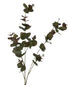 100cm Eucalyptus Green/Red