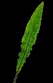 90cm Asplenium Leaf