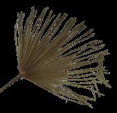 Washingtonia Palm Medium
