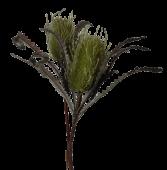 74cm Dried Look Protea Spray 2 heads Green