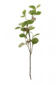 75cm Seeding Eucalyptus Green
