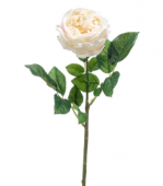 Rose Jenny Spray Real Touch 60cm Cream