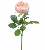 Rose Jenny Spray Real Touch 60cm Peach
