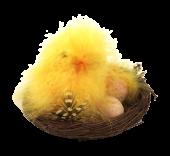 Fluffy Chick Nest 11cm