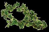 Variegated Ivy Garland 152cm UV Protected