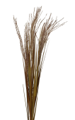 Reed Spray 77cm Brown