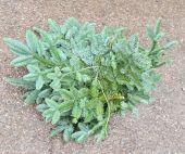 Fresh Spruce Bundle App 5kg