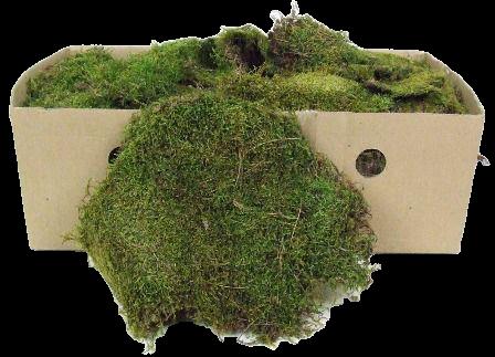 Flat Moss Box 1 Kg