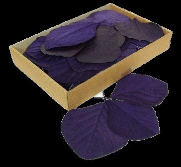 Cobra Leaves Aubergine 100 Per Box