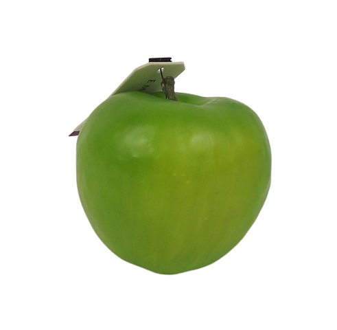 Apple w weight 7.5cm Green