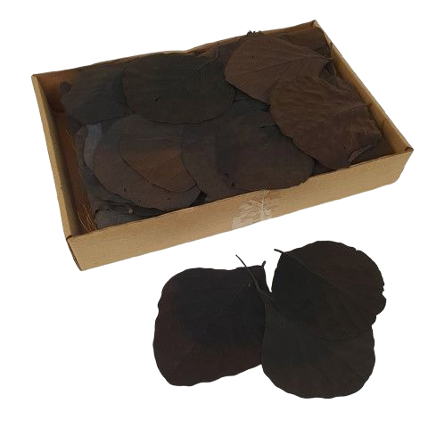 Cobra Leaves Black 100 Per Box