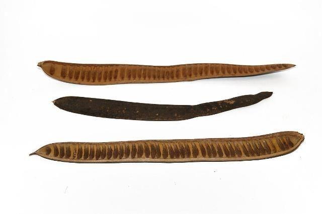 Acaciabeans Natural x 20