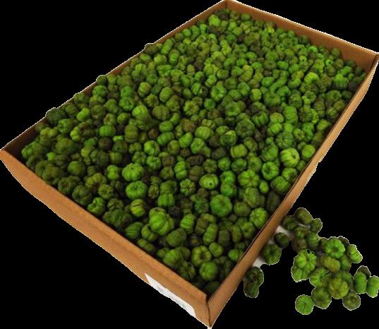 Putka Pods Light Green