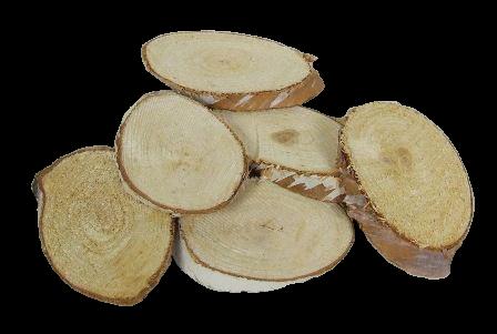 Birch Woodslices Oval