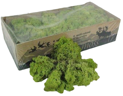 Reindeer Moss (Icelandic Moss) Old Green