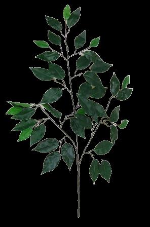 Ficus Spray Green x 42 Leaves 68cm