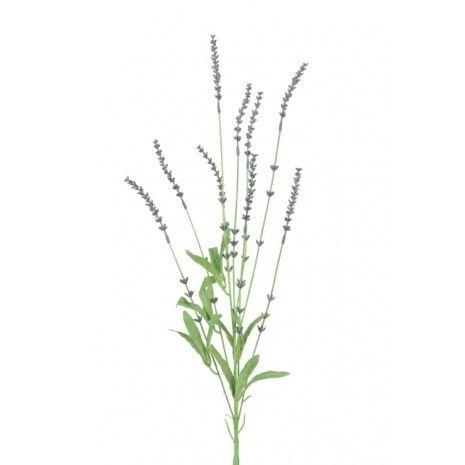 English Lavender Spray 85cm