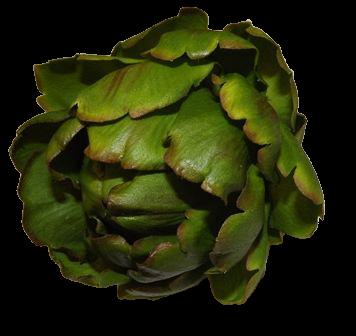Artichoke Green 10cm